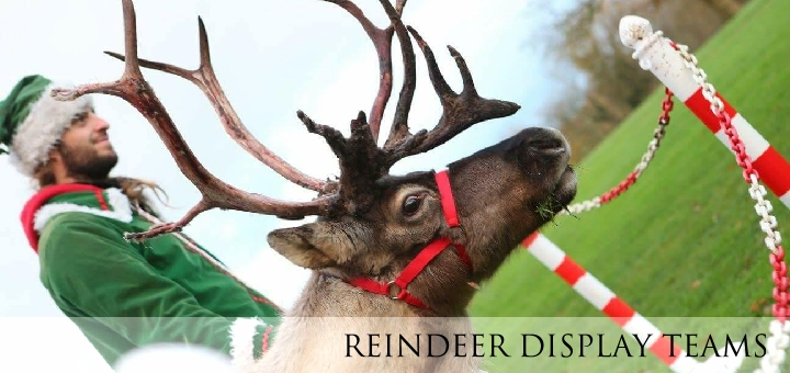Reindeer Lodge, Reindeer Hire UK