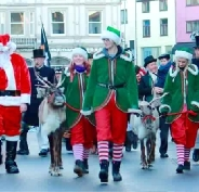 Reindeer Hire sleigh pull parade team from Willow Brook Reindeer Lodge