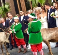 Reindeer hire for reindeer displays in Cheshire, Manchester, Liverpool and North Wales